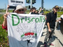Driscoll's Pulls the Strings at Sakuma Bros