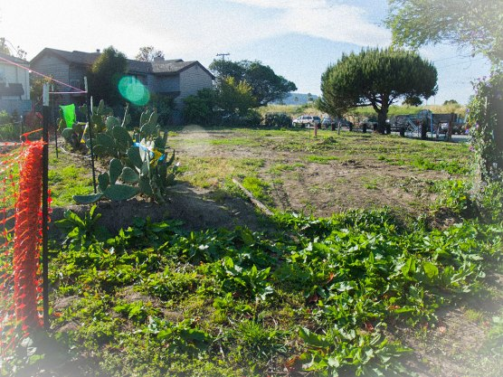 On March 24, City of Santa Cruz parks officials used heavy machinery to clear a portion of the Beach Flats Garden that the Seaside Company is attempting to reclaim.