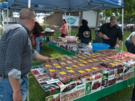 A Table of Driscoll's Strawberries Grown Locally and Not Organically