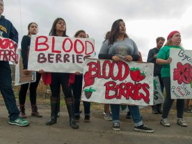 Boycott Driscoll's: Stop Blood Berries