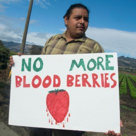 No More Blood Berries