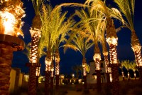 STELLA LED PALM TREE LIGHT - Bradley Lighting
