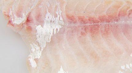 seabream-fillets