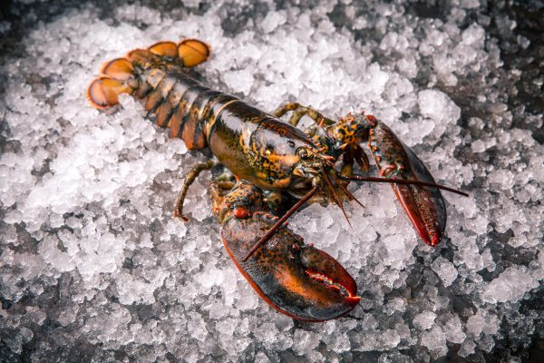 whole raw frozen lobster