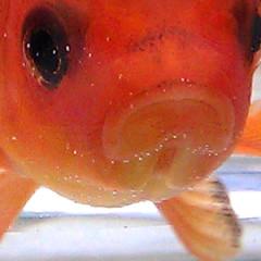 Fishbowl1-240x240