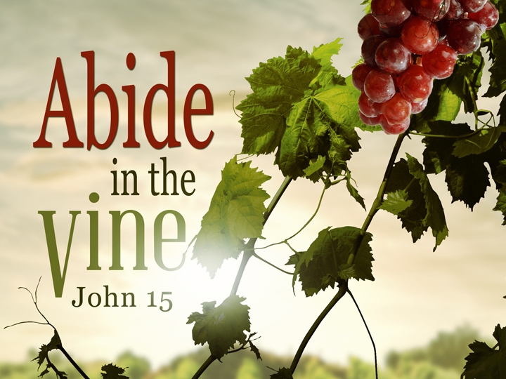 Abide In The Vine- Week One