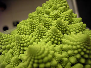 Il broccolo romano usato per condire i maccheroni