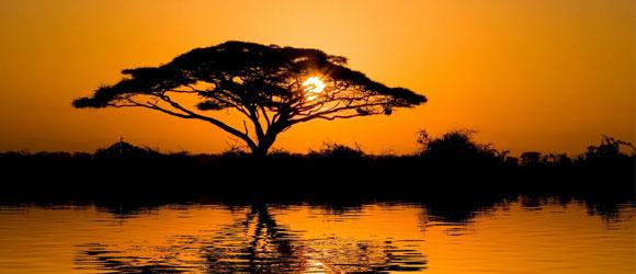 """Le mot """"arbre"""" permet-il une représentation réel de ce qu'est un arbre ?"""