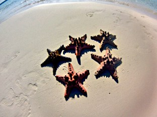 Starfishes in Candaraman sandbar