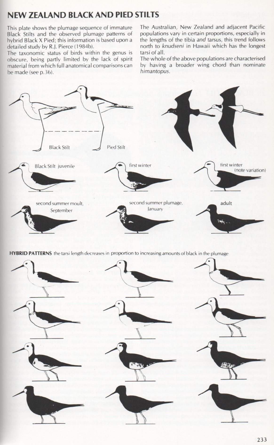 From: Shorebirds - An Identification Guide to the Waders of the World