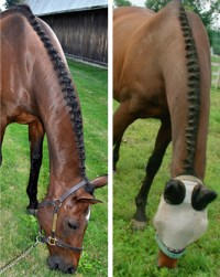 Braiding wire for horse hair by Twisteezwire