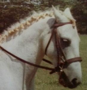 My mane braids before I learned my braid secrets.