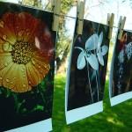 Expozitie de fotografie Fotografia florala