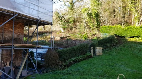 Large section of hedge removed