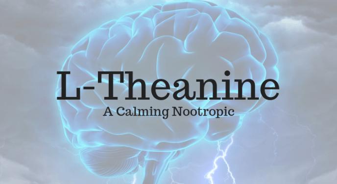 L-Theanine nootropics