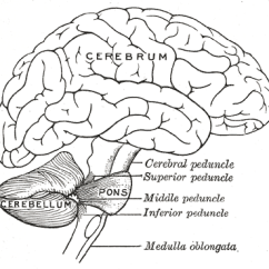 Lower Brain Diagram Air Conditioner Wiring Car A Of The Brainbusted