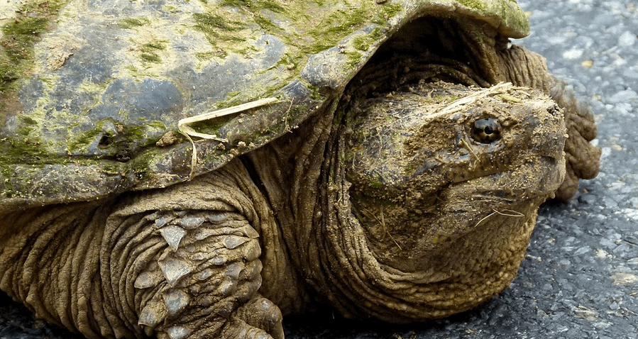 Exonerated Science Teacher Feeds Deformed Puppy To Snapping Turtle While Student's Watched