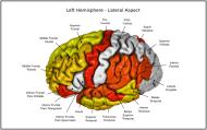 Appeared in Meda et al. (2012), Neuroimage. [http://dx.doi.org/10.1016/j.neuroimage.2011.12.076]