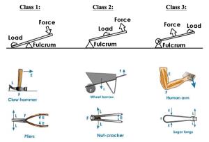 Ferris Wheel Diagram Of Force Simple Machines Braineducoin