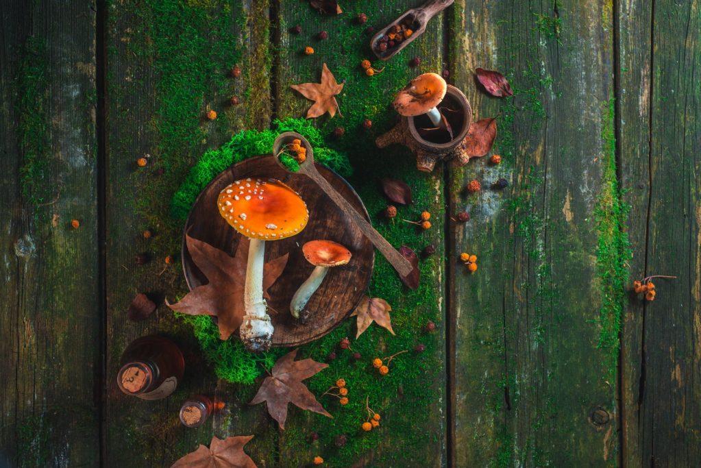 Mushrooms Vancouver