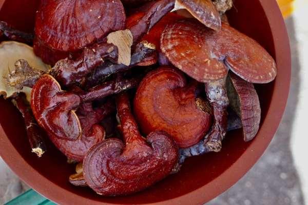 Reishi Mushroom Supplements