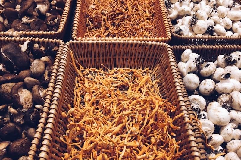 Cordyceps Mushrooms