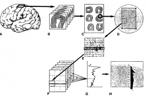 Measurement_Steps_from_1995_fig2