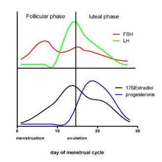 sex hormones immunity figure 1