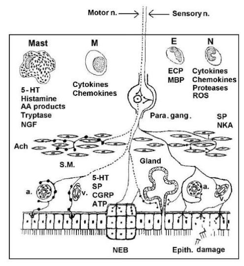 neuroendocrine-immune interactions and lung diseases figure