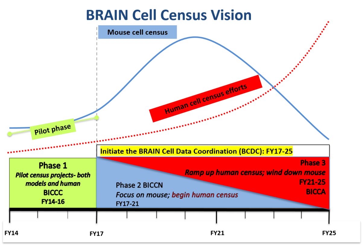 hight resolution of brain cell census vision through 2025 graph of phase and year phase 1 pilot