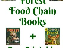 Free Printable Forest Food Chain Game with Book List