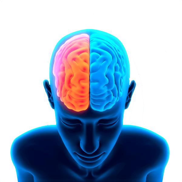 Image result for brain images