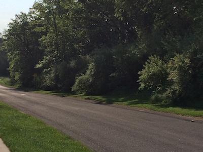 Autumn Olive Shrubs Taking Over the Roadside. I Hate Them.