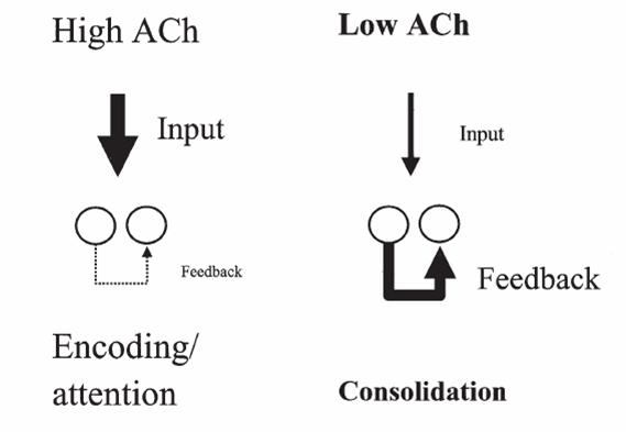 Funcionamento da Acetilcolina (ACh)
