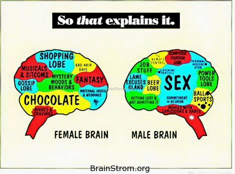 female differences brain vs Male