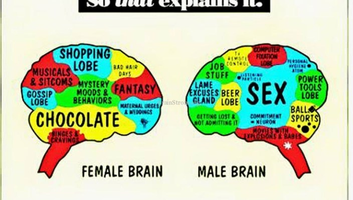 differences in between men's as well as lady heads essay