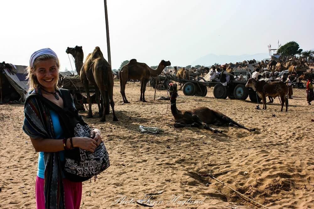 At the largest camel market in India, Pushkar