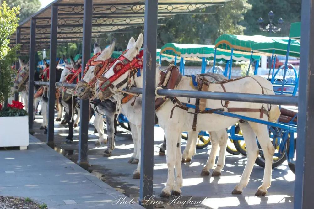 Mijas Donkey Taxi stand in Mijas Pueblo