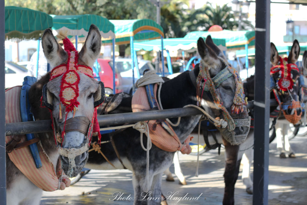 Never ride a donkey in Mijas