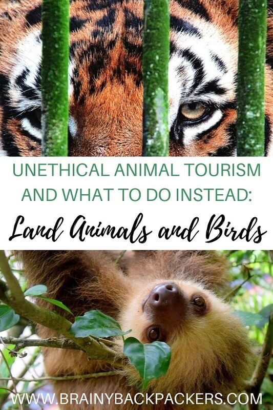 Unethical animal tourism and what to do instead. Travelers share their unethical animal tourism experiences and show you what to do instead to have an ethical animal encounter. Responsible travel tips on ethical animal tourism.