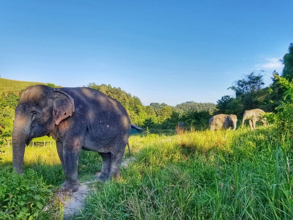 Ethical elephant encounter in Chiang Mai