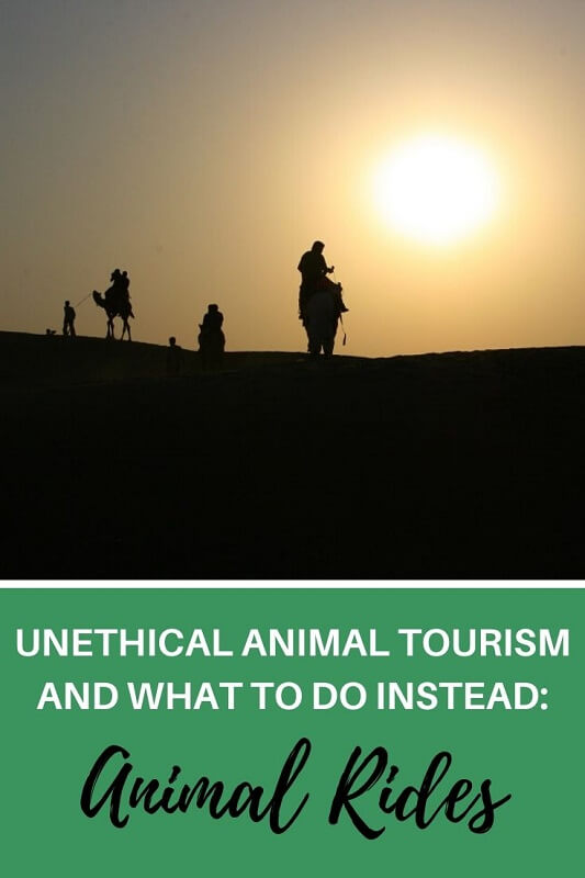 Do you love animals? Make sure you check well the activities you do on your holiday and stay away from unethical animal rides. This post takes you through what you shouldn't do and why. Travelers ahare their experiences on animal rides and what you should do instead.