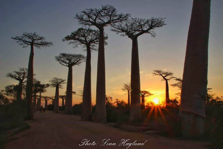One of the off the beaten path travel destinations you should visit is Madagascar
