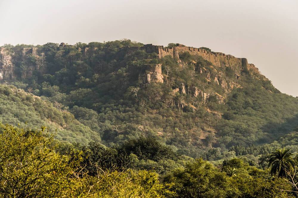 Ranthambore is an incredible place to visit in Rajasthan
