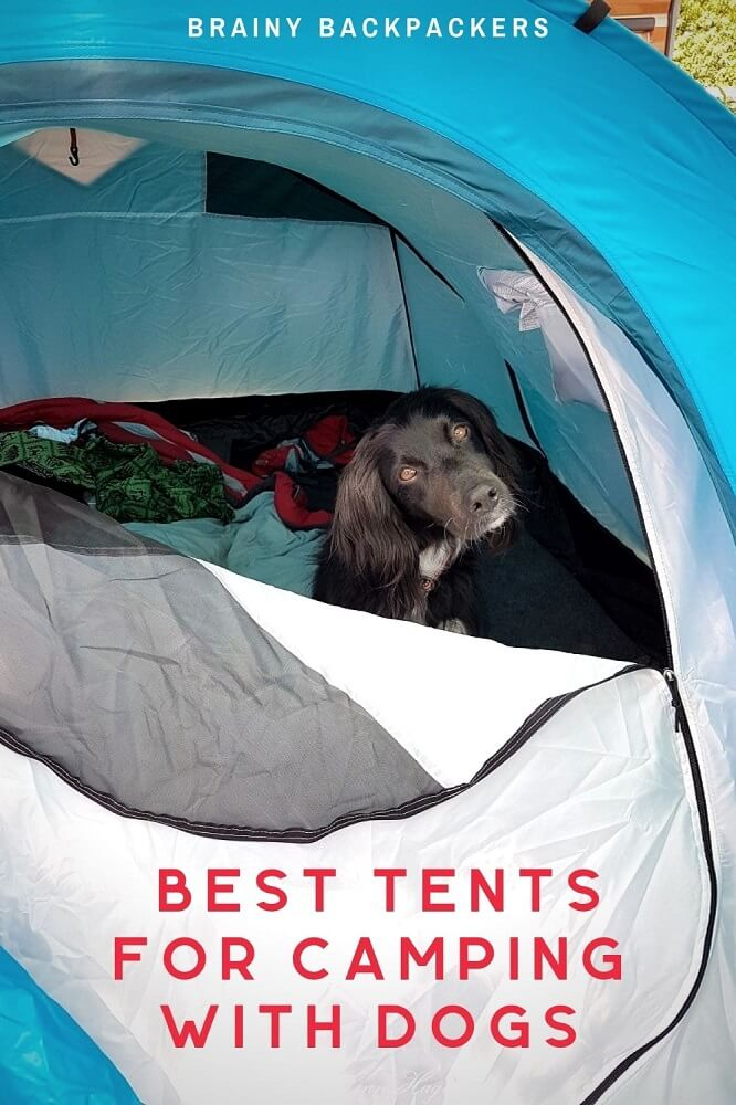 Are you looking for the best tent for campiing with dogs? Here is a complete guide to how to find the best dog friendly tent and the best tents for camping with dogs. #camping #tent #dogs #dogcamping #responsibletourism #brainybackpackers #outdoors #outdoorgear #tentreview