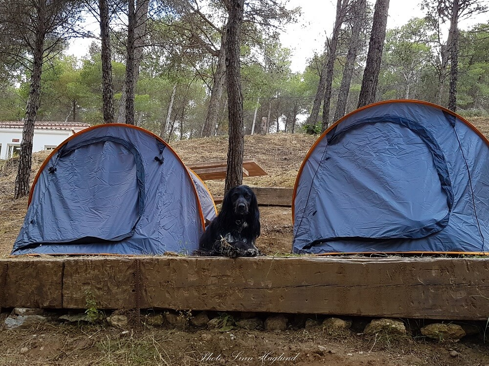 How to choose a dog friendly tent