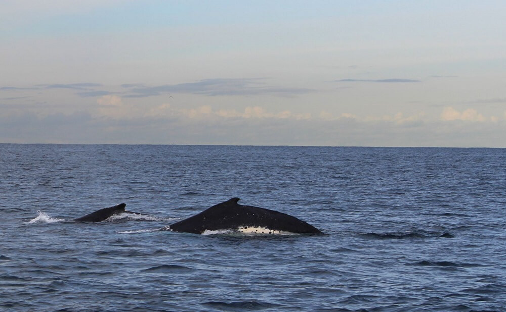 Whales in Sydney