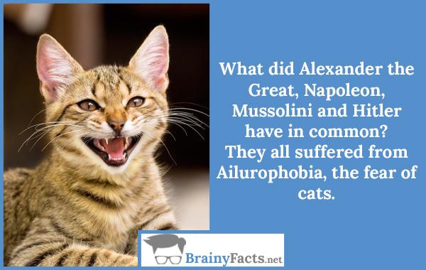 Phobia Facts : Ailurophobia | did you know