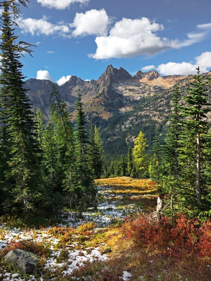 View from Blue Lake Trail of a colorful clearing - golden grass and red-colored shrubs - between firs with mountains in the background