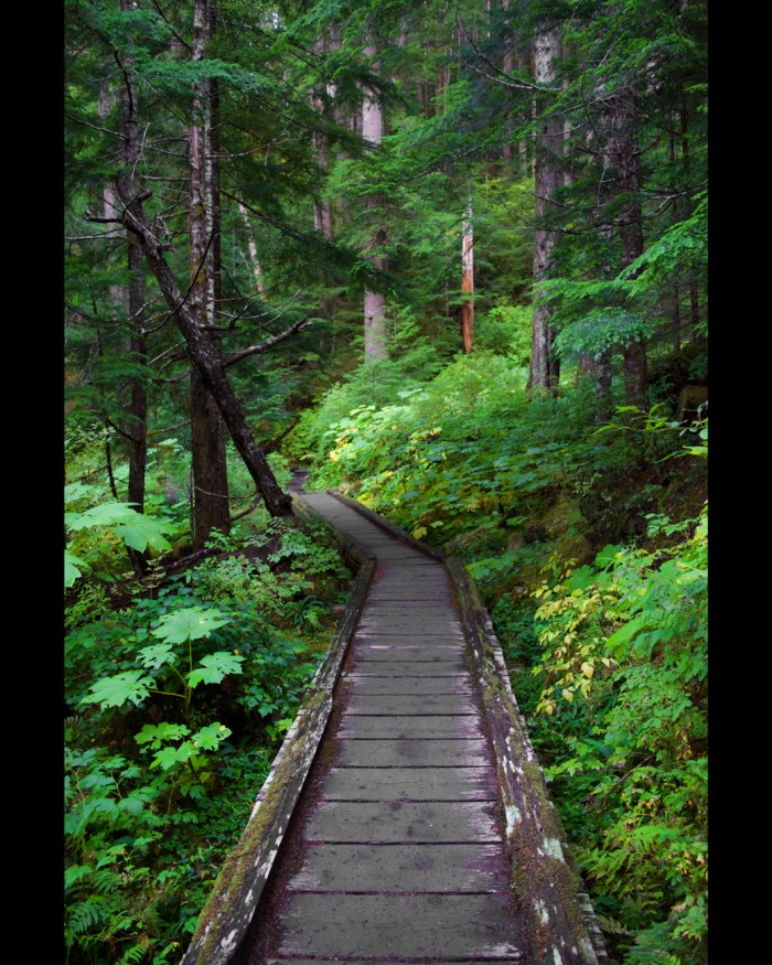 Boardwalk trail through the rainforest to Sol Duc Falls